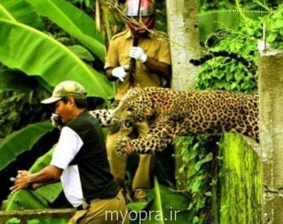 عکس های بسیار جالب و زیبا از شکار لحظه ها